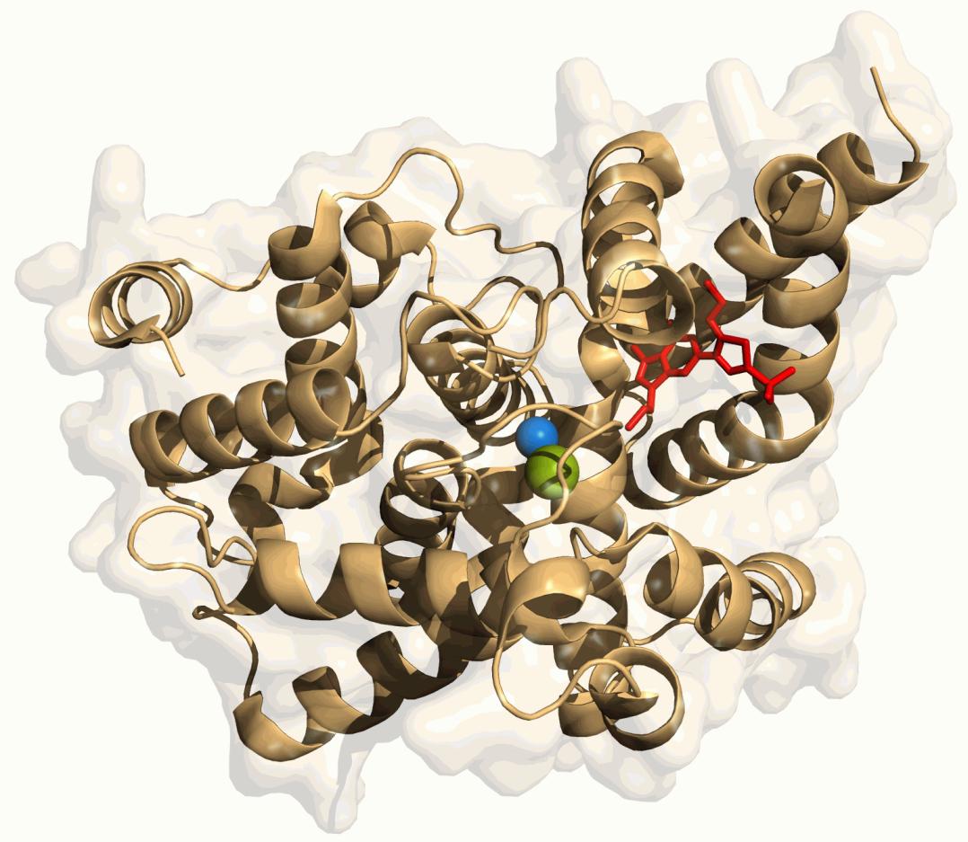 Phosphodiesterase 5 enzyme
